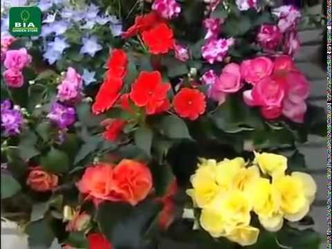Come avere un giardino in fiore tutto l 39 anno fai da te mania for Tutto x giardino
