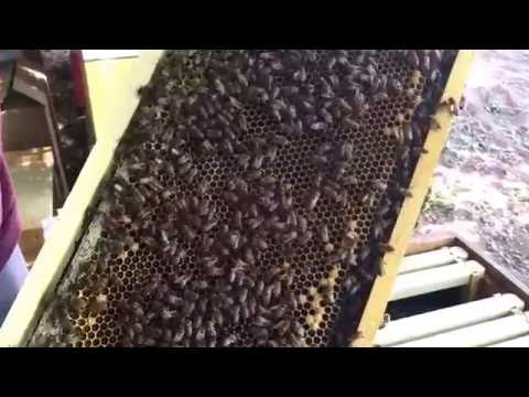 Honey bees in the North Valley