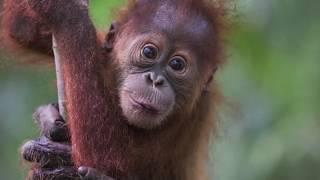 10 Zeldzaamste Dieren ter Wereld!