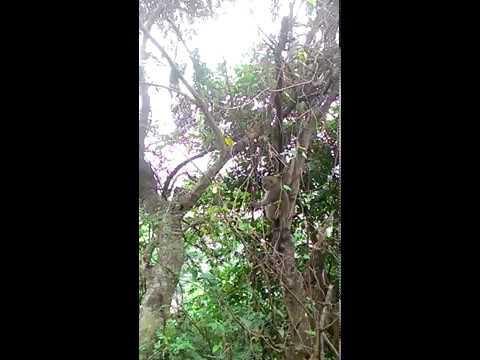 花蓮縣中正國小403佐倉步道健行~給猴子看1 - YouTube