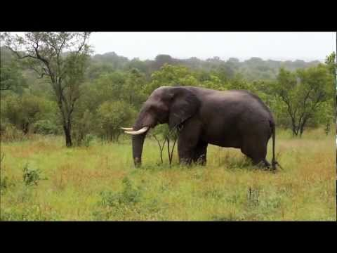 Safari – Kruger National Park – Hazyview, South Africa (01-17-2012)