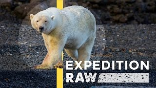 Polar Bear Charges Nat Geo Photographers | Expedition Raw