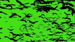EFFETTI VIDEO AUDIO BLU GREEN SCREEN UCCELLI BIRD CROW 4