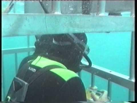 Great White shark cage dive voor Reizen in Beeld