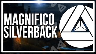 Magnifico - Silverback