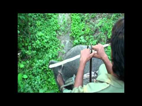 Nepal. Reserve Chitwan. part 4-1.mpg