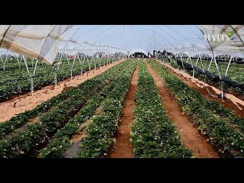 Video : Agriculture : La filière des fruits rouges résiste à la crise