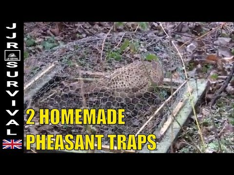 Homemade Pheasant Traps