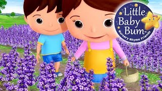 Lavender's Blue Dilly Dilly | Nursery Rhymes | By LittleBabyBum!