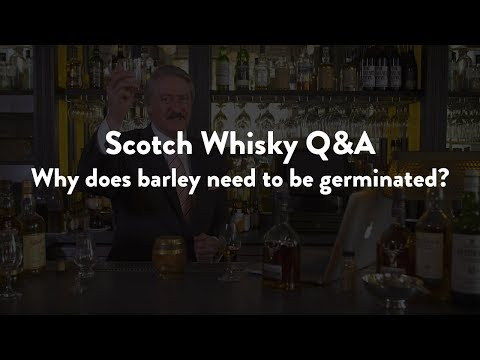 Scotch Whisky Q&A - Why does barley need to be germinated and malted to make whisky?