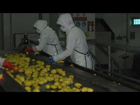 'Türkiye, 30 bin ton patates nişastası ithal ediyor'