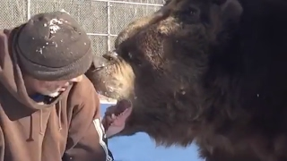 Man Bonds with Giant Bear | ABC News