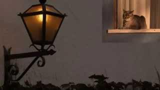 Fica Comigo Esta Noite || Angela Ro Ro