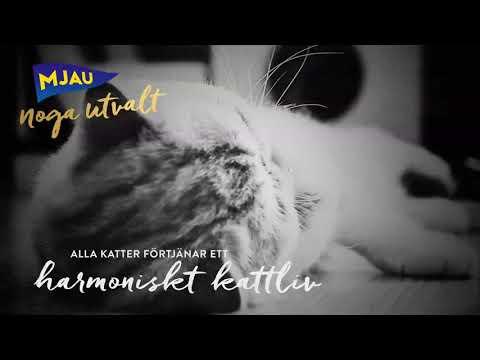 Nyhet! Torrfoder för kastrerade katter - Mjau Noga Utvalt