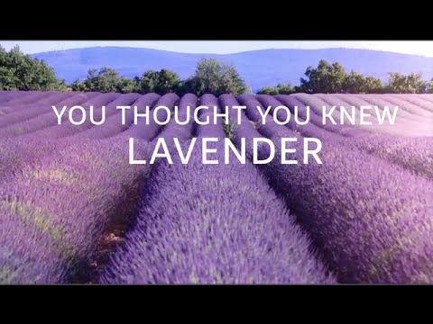 You Thought You knew Lavender