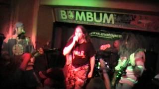 Zordon - Bird flu (live)