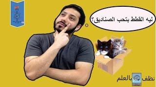 كبسولة علم  ... القطط و حب الصناديق (العشق الممنوع)