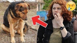 Ella vio a un hombre dejar a su perro a un lado de la carretera. Lo que pasó después te hará llorar.