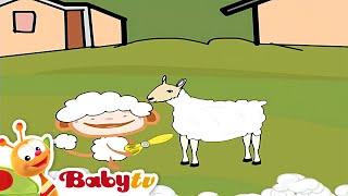 Tosando as ovelhas com Oliver - BabyTV Português
