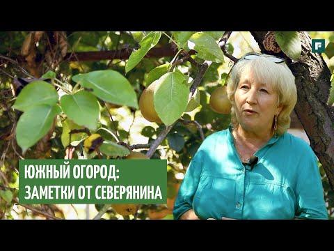 Как вырастить плодовые растения из косточки на юге, если ты с севера: личный опыт // FORUMHOUSE