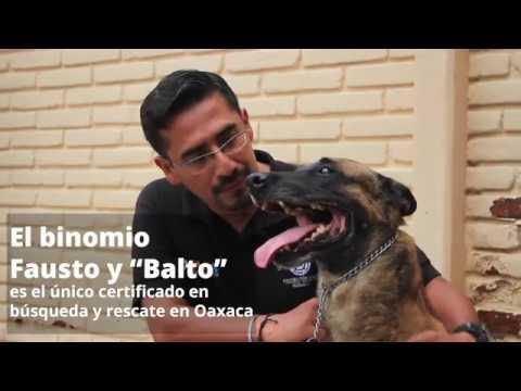 Fausto y Balto, binomio canino oaxaqueño