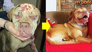 Amazing Journey to Recovery, Safety &Love of a Dog Rescued