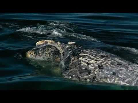 Hermanus Whale Watching – South Africa