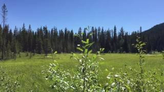 Birdsong in a mountain meadow