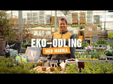 Eko-odling med Marika