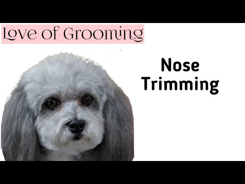 How To Trim Below a Dogs Nose