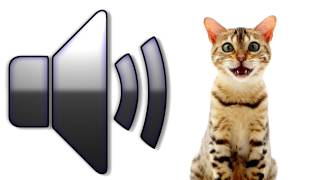 Cat Meowing - Sound Effect - Download