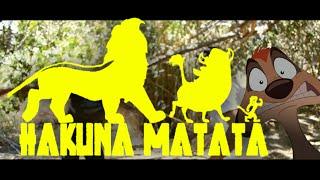 Hakuna Matata ROCK Cover - El Rey Leon DISNEY ROCK LATINO 🙉 | Ivan Lerma