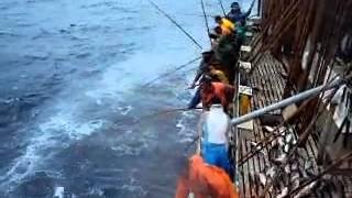 Pesca Atum - mestre Pedro p.1