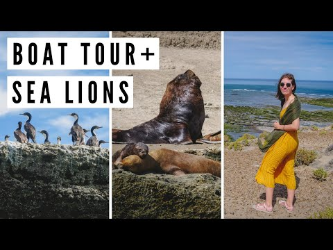 Spotting SEA LIONS in Peninsula Valdes on a Boat Tour   Chubut, Argentina