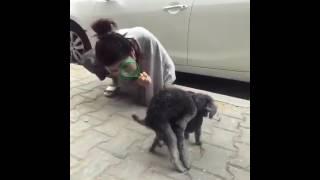 狗狗做爱 害羞😳