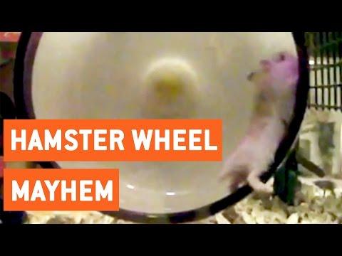 Hamster Wheel Mayhem | Slo Mo Struggles