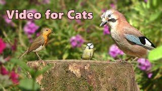 Videos for Cats 🌸 Birds in The Flower Garden 🌸 10 HOURS of Cat TV