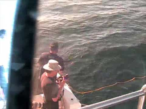 South Africa Great White Sharks Cape Town Part 1