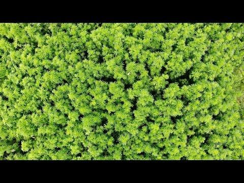 prAna - Why Hemp Matters | Kind of a Wonder Crop