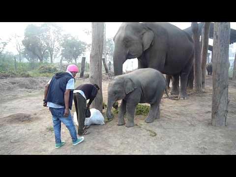 Chitwan-只吃內餡把外包的草拉出來