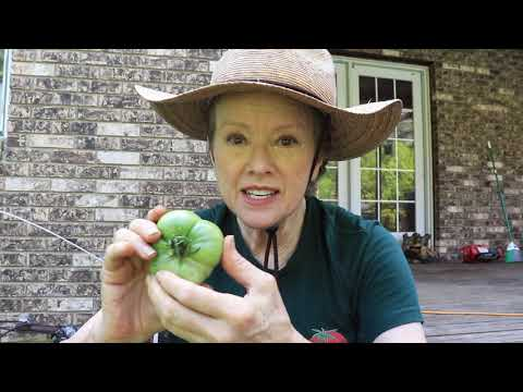 ENEMY in RETREAT | Garden Transformation Part 3 // Late Bloomer