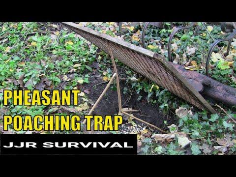 Pheasant Poaching Trap