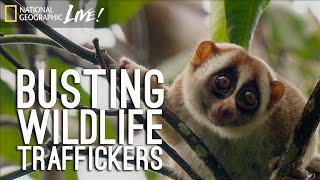 Why I Don't Feel Guilty for Busting Wildlife Traffickers | Nat Geo Live