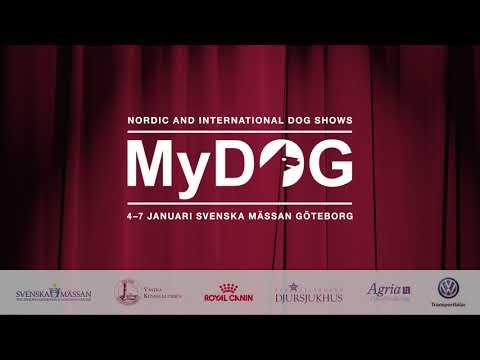 MyDOG - Hundteater