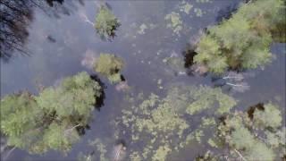 Teiču dabas rezervāts - Demons - Imagine Dragons - Simply Three