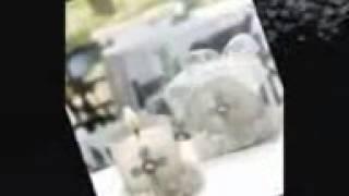 Intocable   El Amigo Que Se Fue (Video Original)