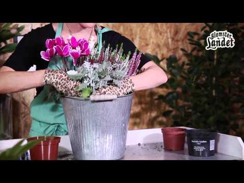 Plantera i kruka - skapa din plantering med höstväxter