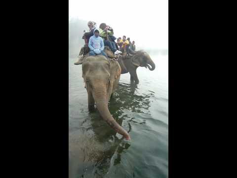Chitwan-象隻過河03