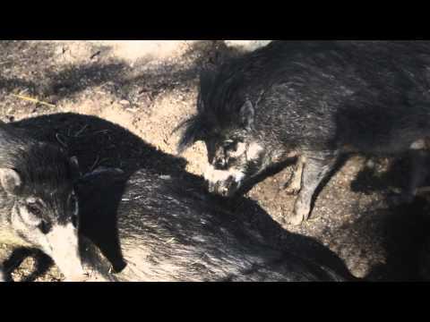 Bo på Zoo Parken Zoo Eskilstuna. Reklamfilm 2015
