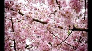 Blossoming Trees -  Happy Music
